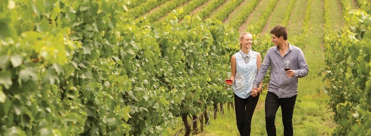 Explore the World-Famous Jacob's Creek Winery