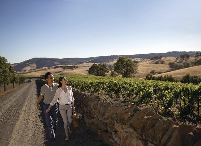 Jacobs Creek, Barossa Valley Winery Tour -