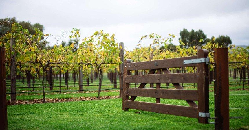 Jacobs Creek - Vineyard
