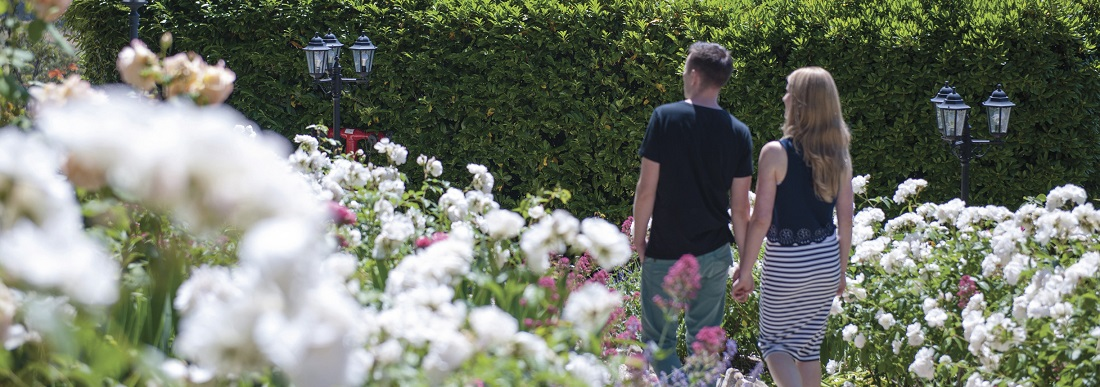 What to Do at Barossa Chateau's Rose Garden