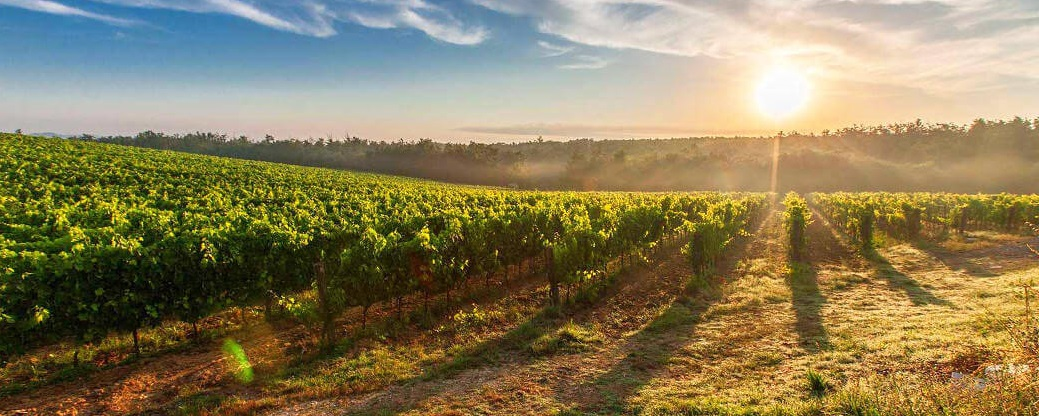 The Most Spectacular Wine Region in Barossa Valley