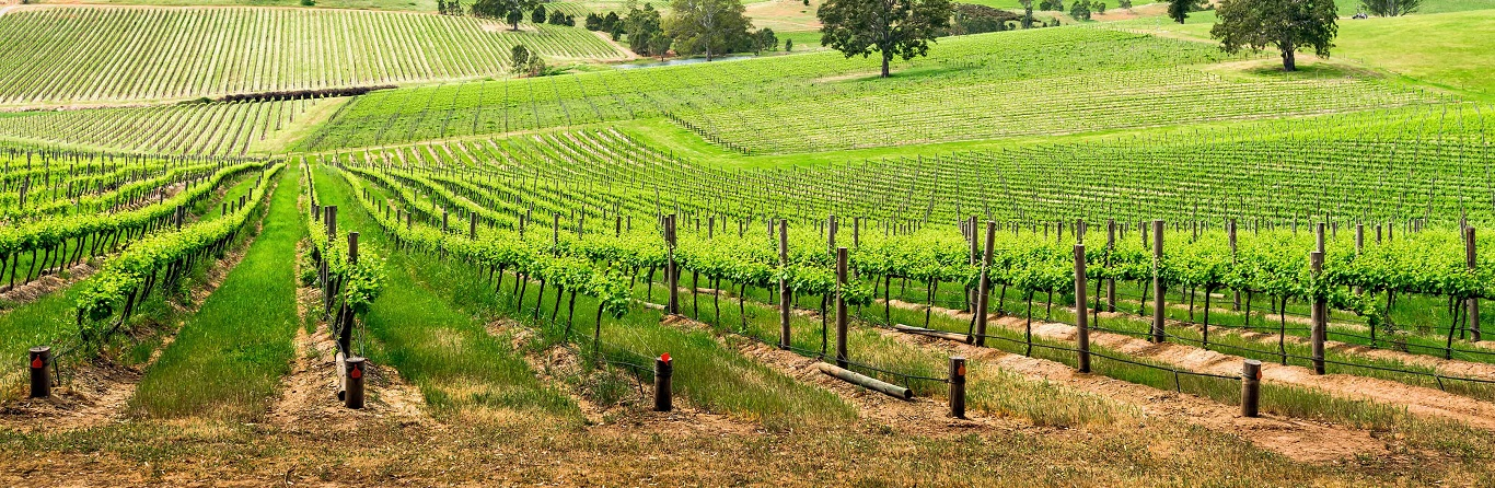 What are the differences between our Barossa Valley Tours?