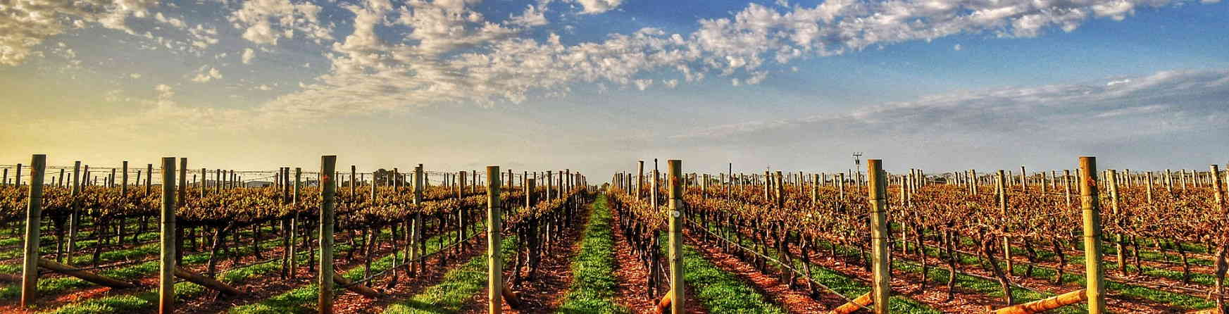 Why You Should Return to the Barossa valley?