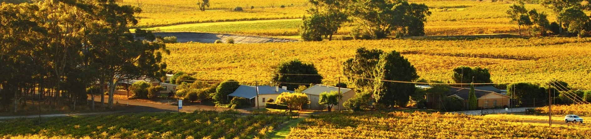 How to Visit the Barossa Valley During Covid-19